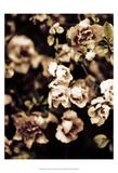 Romantic Roses I Prints by Tang Ling
