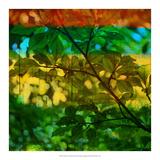 Abstract Leaf Study I Giclee Print by Sisa Jasper