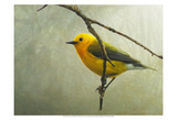 Prothonotary Warbler Posters par Chris Vest