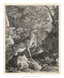 Woodland Deer VII Giclee Print by  Ridinger
