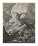 Woodland Deer VIII Giclee Print by  Ridinger