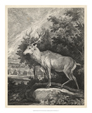 Woodland Deer II Giclee Print by  Ridinger