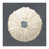 Shell on Slate VII Giclee Print by Megan Meagher