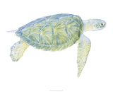Tranquil Sea Turtle I Giclee Print by Megan Meagher