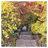 Autumn Tunnel Giclee Print by Colby Chester