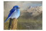 Mountain Blue Bird Prints by Chris Vest
