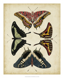 Display of Butterflies II Giclee Print by  Vision Studio