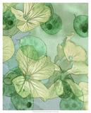 Mint Progeny III Giclee Print by Sharon Chandler