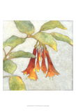 Fuchsia Blooms I Posters by Megan Meagher