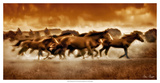 Blazing Herd I Giclee Print by David Drost