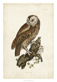 Tawny Owl Giclee Print by John Selby