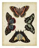 Display of Butterflies IV Giclée-Druck von  Vision Studio