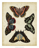 Display of Butterflies IV Giclee Print by  Vision Studio