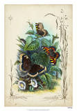Victorian Butterfly Garden IV Giclee Print by  Vision Studio