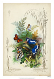 Victorian Butterfly Garden III Giclee Print by  Vision Studio