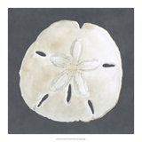 Shell on Slate II Giclee Print by Megan Meagher