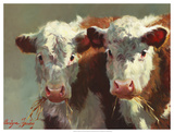 Cow Belles Giclee Print by Carolyne Hawley