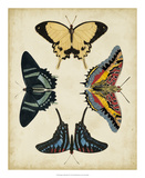 Display of Butterflies III Giclee Print by  Vision Studio