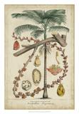 Palma Exotica II Giclee Print by  Vision Studio
