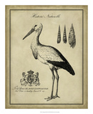 Antiquarian Stork Giclee Print by  Vision Studio
