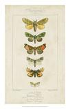 Pauquet Butterflies II Giclee Print by  Pauquet