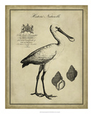 Antiquarian Spoonbill Giclee Print by  Vision Studio