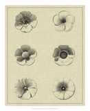 Floral Rosette I Giclee Print by  Vision Studio