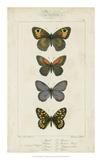 Pauquet Butterflies V Giclee Print by  Pauquet