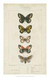 Pauquet Butterflies VI Giclee Print by  Pauquet