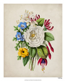 Spring Posy III Giclee Print by Winslow Peachy