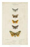 Pauquet Butterflies IV Giclee Print by  Pauquet