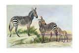 From 'The Knowsley Menagerie', June 13th 1844 Giclee Print by Benjamin Waterhouse Hawkins