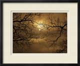 Branches Surrounding Harvest Moon Framed Photographic Print by Robert Llewellyn
