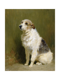 Portrait of Pilu, a Performing Dog, 1910 Giclee Print by John Charlton