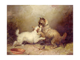 The Bone of Contention, 1872 Giclee Print by George Armfield
