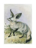 Long-Eared Fox, from 'The Knowsley Menagerie', 1847 Giclee Print by Benjamin Waterhouse Hawkins