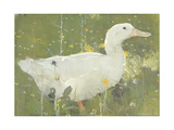 The White Drake Giclee Print by Joseph Crawhall