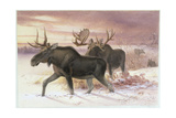 Elk, Family Cervidae (Deer), 14th October 1850 Giclee Print by Joseph Wolf
