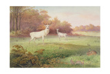 From 'The Knowsley Menagerie', October 24th 1850 Giclee Print by Joseph Wolf