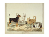The Terrier Giclee Print by Sydenham Teast Edwards