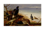 Blackgame, 1903 Giclee Print by Archibald Thorburn