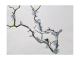 Lichens on Sycamore Branch, 1994 Giclee Print by Rebecca John