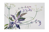 Sage, Fennel, Catmint, 1996 Giclee Print by Rebecca John