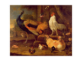 Poultry, c.1670 Giclee Print by Melchior de Hondecoeter
