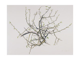 Spring Blackthorn, 1998 Giclee Print by Rebecca John