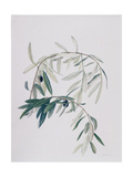 Olive Branches, 1998 Giclee Print by Rebecca John