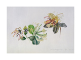 Wild Honeysuckles, 1999 Giclee Print by Rebecca John
