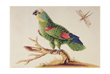 Green Parrot Giclee Print by Sarah Stone