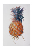 Queenie Pineapple, 1994 Giclee Print by Rebecca John