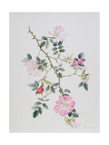 Dog Rose, 2003 Giclee Print by Rebecca John